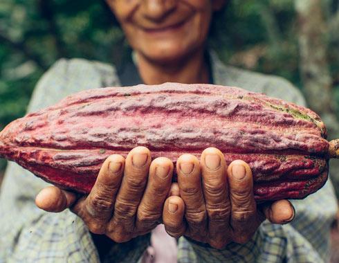 Fèves de cacao Allpampa, produits alimentaires biologiques et équitables, en vrac ou sachet, en provenance d'Amérique latine