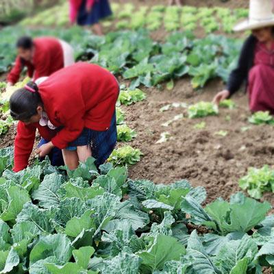 Coopératives de communautés de producteurs paysans en Amérique latine
