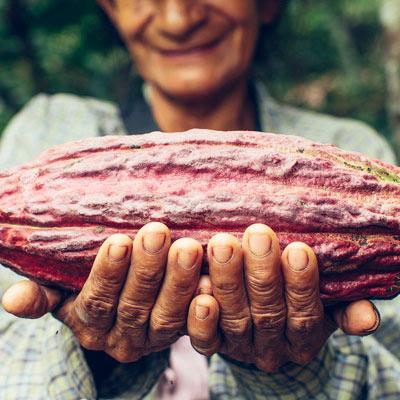 Cabosse de cacao Allpampa, produits alimentaires biologiques et équitables, en vrac ou sachet, en provenance d'Amérique latine